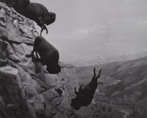 wojnarowicz-buffaloes